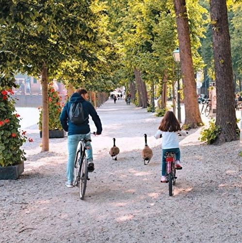 5 dagen fietsen door Het Groene Hart